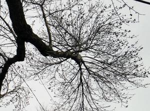 neighborhood_tree10.jpg