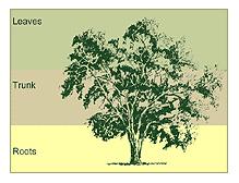 aboretum_tree.jpg