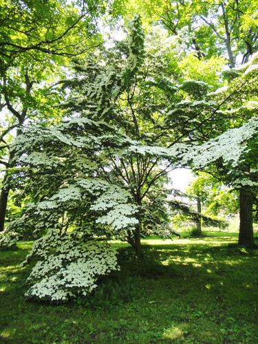 arboretum10.jpg