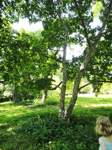 arboretum11.jpg