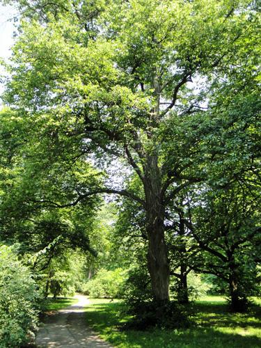 arboretum4.jpg