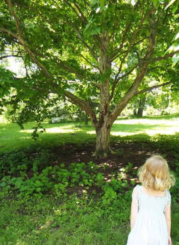 arboretum8.jpg