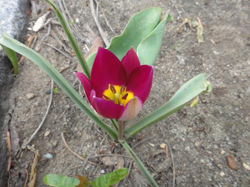 bloom4_14a.jpg