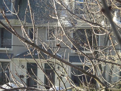 branch2_15.jpg