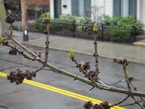 branch4_23.jpg