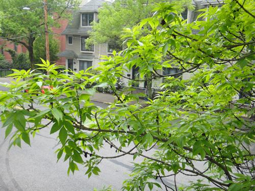 branch5_18.jpg