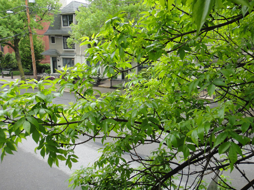 branch5_23.jpg