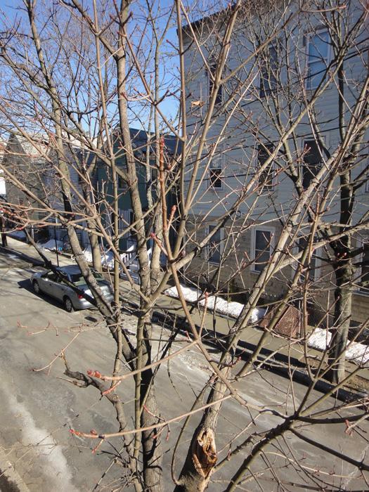 http://treeblog.hansels.net/treeblog/bud_2_23.jpg