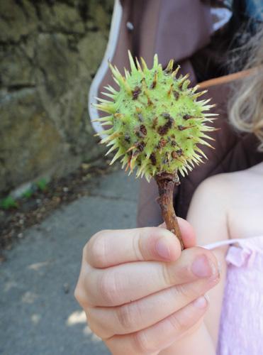 chestnut_tree8_1b.jpg