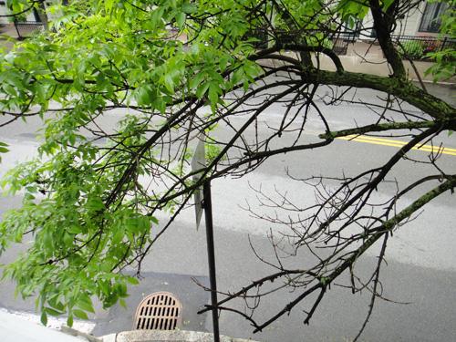 http://treeblog.hansels.net/treeblog/dead_branches5_23a.jpg