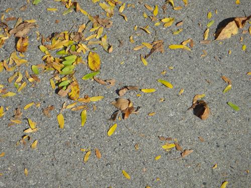 honeylocust_leaves9_28.jpg