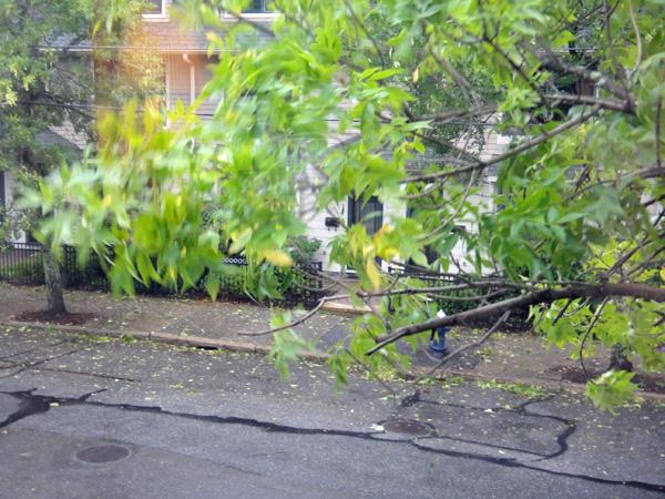hurricane_branches.jpg