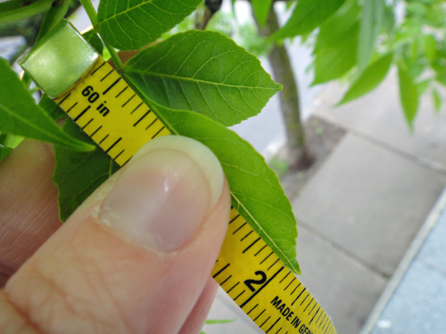leaf_grow5_23.jpg