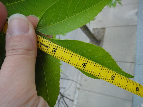leaf_grow_lg5_14.jpg