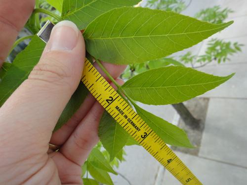 leaf_grow_lg5_9.jpg