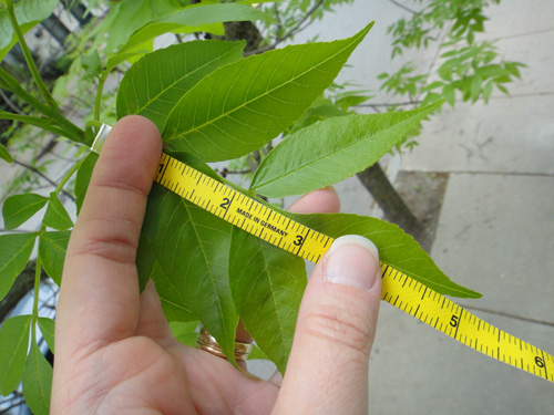 leaf_large5_12.jpg
