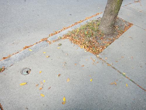 leaf_pile9_28.jpg