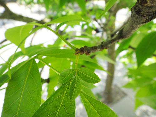 leaf_tiny5_29.jpg