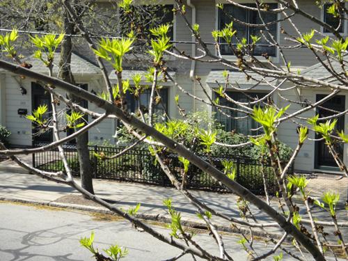 leaves4_29.jpg