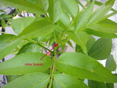 leaves5_14a2.jpg