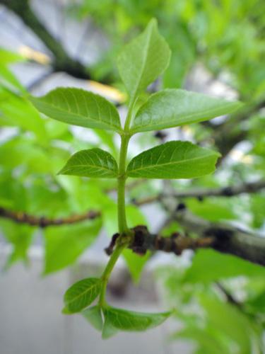 leaves_tiny_5_23.jpg