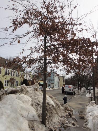 neighborhood_tree11.jpg