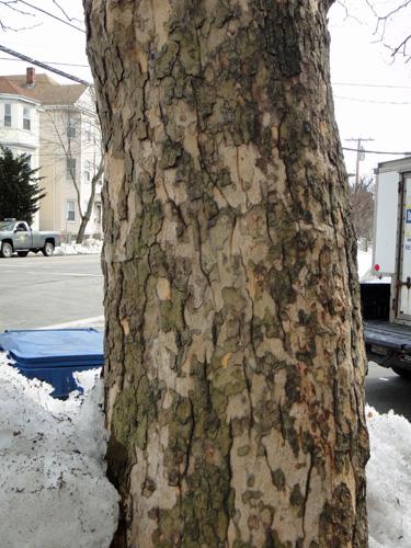 neighborhood_tree12.jpg