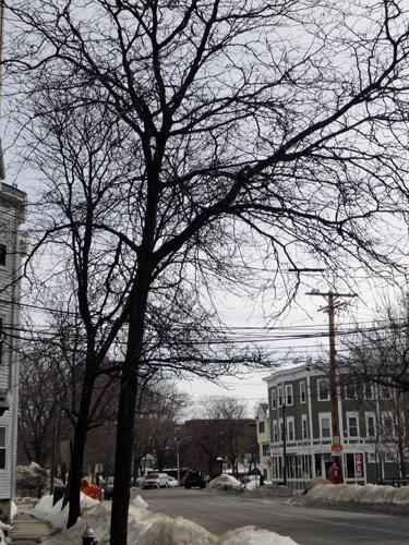 neighborhood_tree13.jpg
