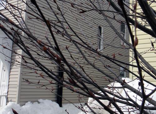 neighborhood_tree3.jpg