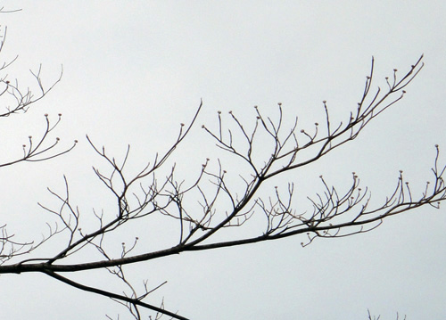 neighborhood_tree4.jpg