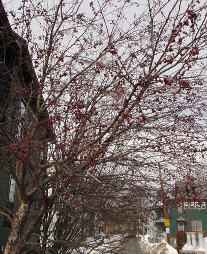 neighborhood_tree6.jpg