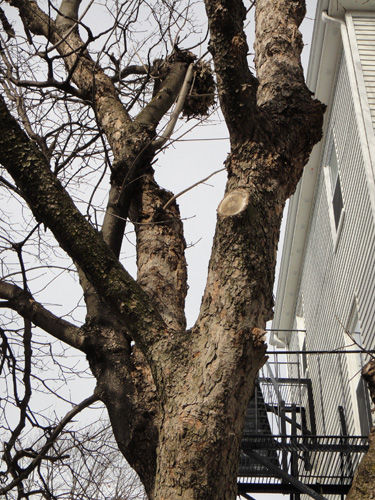 neighborhood_tree7.jpg