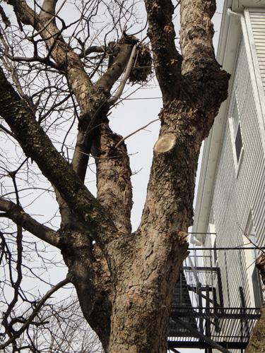 neighborhood_tree7.jpg