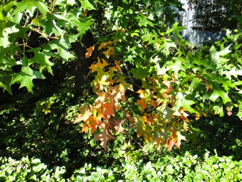 oak10_12.jpg