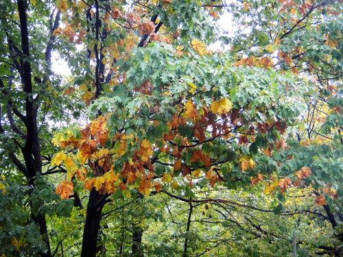 oak10_13.jpg