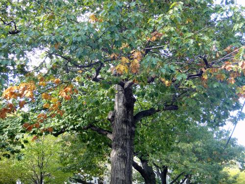 oak10_16.jpg