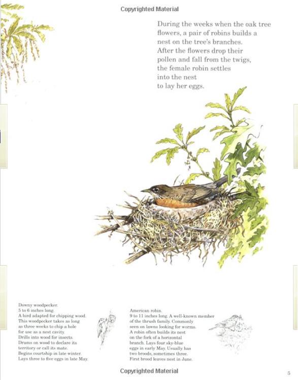 http://treeblog.hansels.net/treeblog/oak_tree_book.jpg