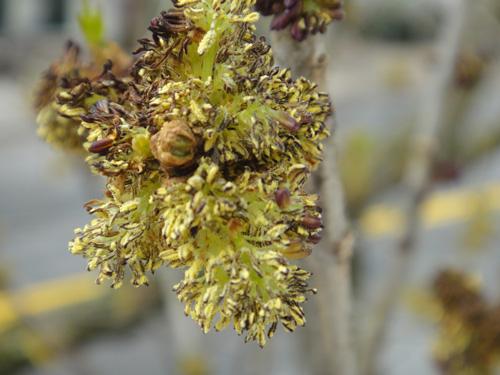 pollen4_25a.jpg
