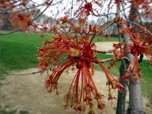 redflowers4_18lg.jpg