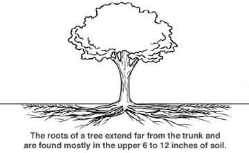 rootgrowth.jpg