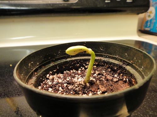 sprout2.jpg