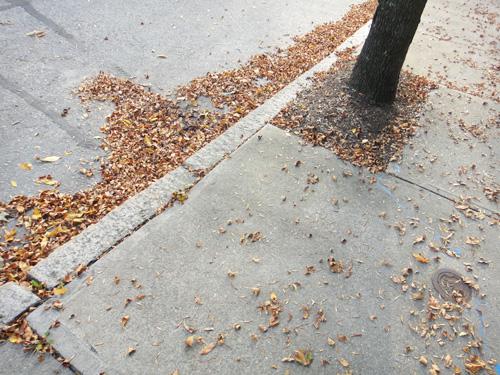 http://treeblog.hansels.net/treeblog/stoplight_girl_leaves9_28.jpg