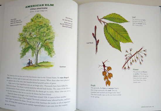 thetreebook5.jpg