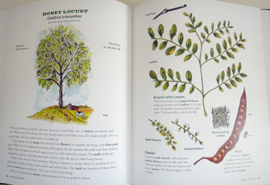 thetreebook6.jpg