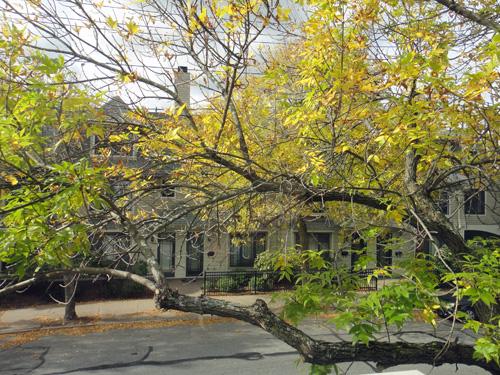 tree10_12.jpg