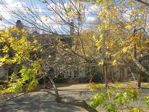 tree10_16.jpg