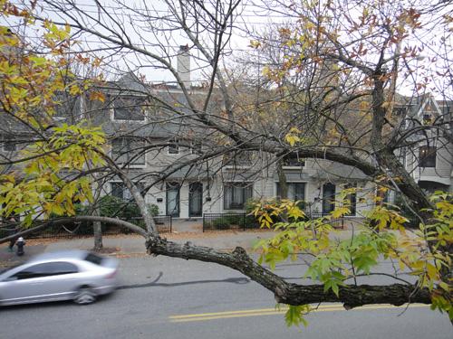 tree10_19.jpg