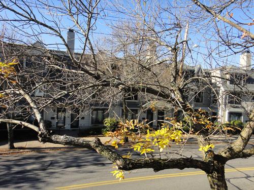 tree10_25.jpg