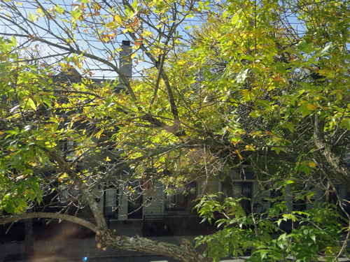 tree10_4a.jpg