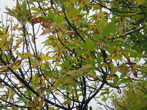 tree10_4b.jpg
